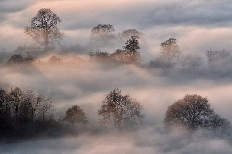 1st-Trees in the Mist-George Ryske