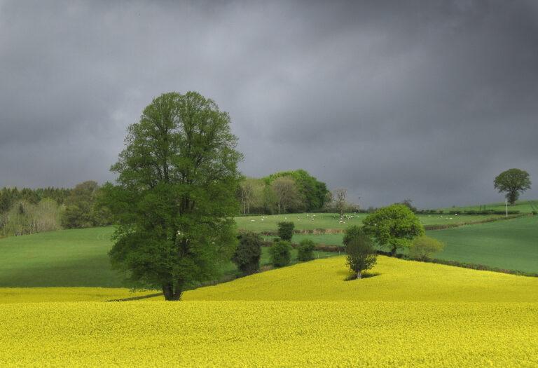 C - Shropshire_Field-Don Grundell