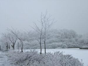 Div 2-HC- Frosty walk-Lucretia Bowen