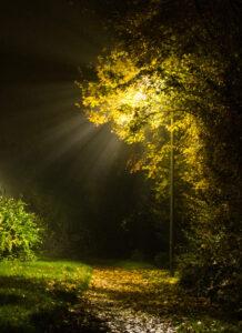 Div 2- HC- Misty lamplight -Diana Baker