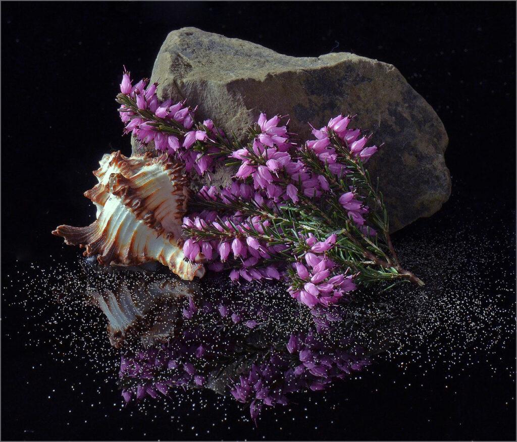 Div 1-HC -Rock Garden -Barbara Gibbons