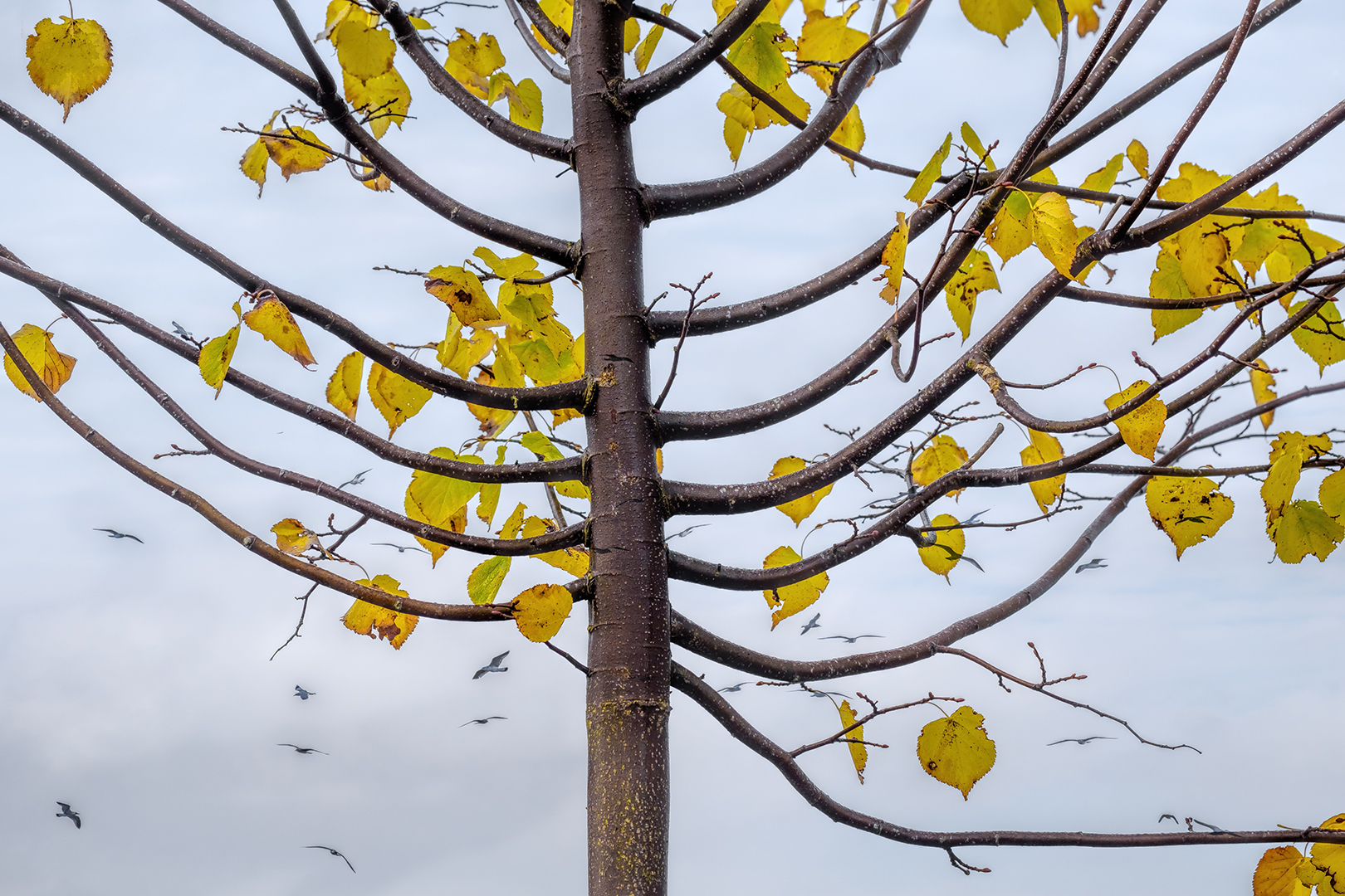 13 Points - The Last Leaves of Autumn- Elizabeth Restall ARPS