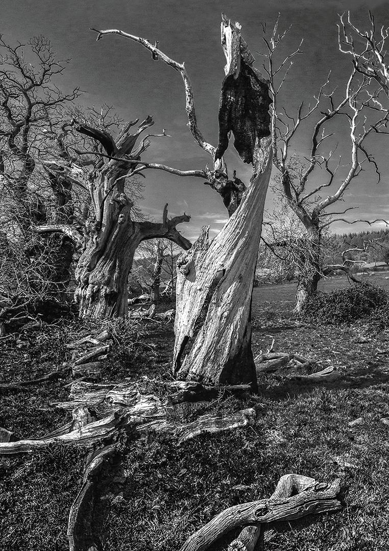 14 Points -The Lightning Tree - David Bishop