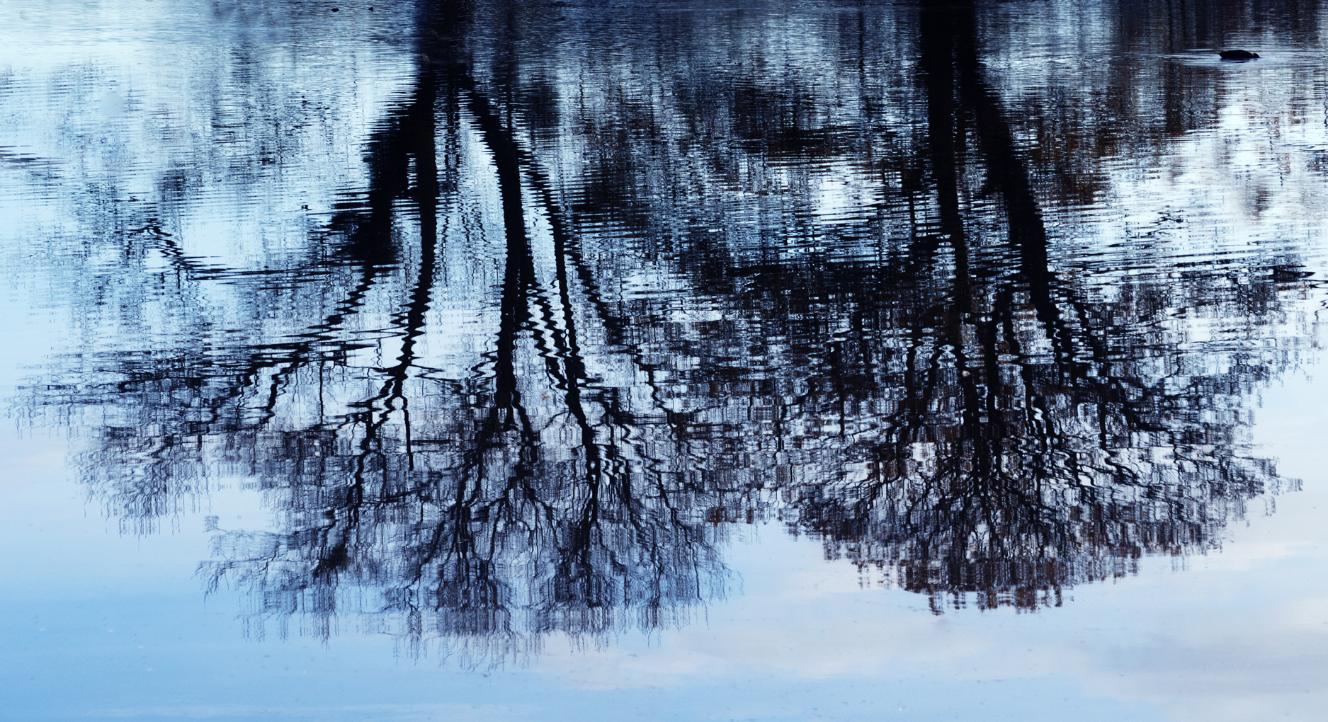 14 Points - Trees in reflection - David King