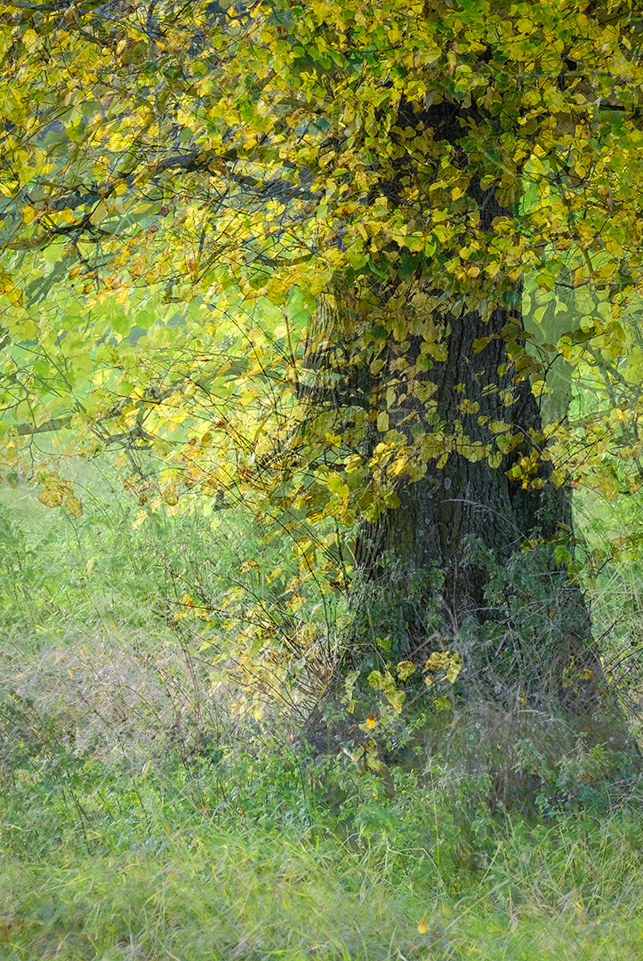 14 points -Golden Light at the Edge of the Wood-Elizabeth Restall ARPS