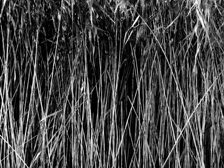 Div 2 - 13Points- Grass chew valley lakes- Elizabeth Oakley