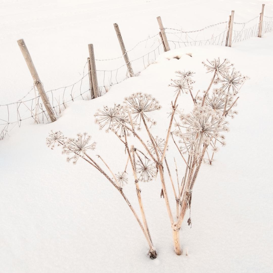 1st-20 Points- Frozen- Bill Breere