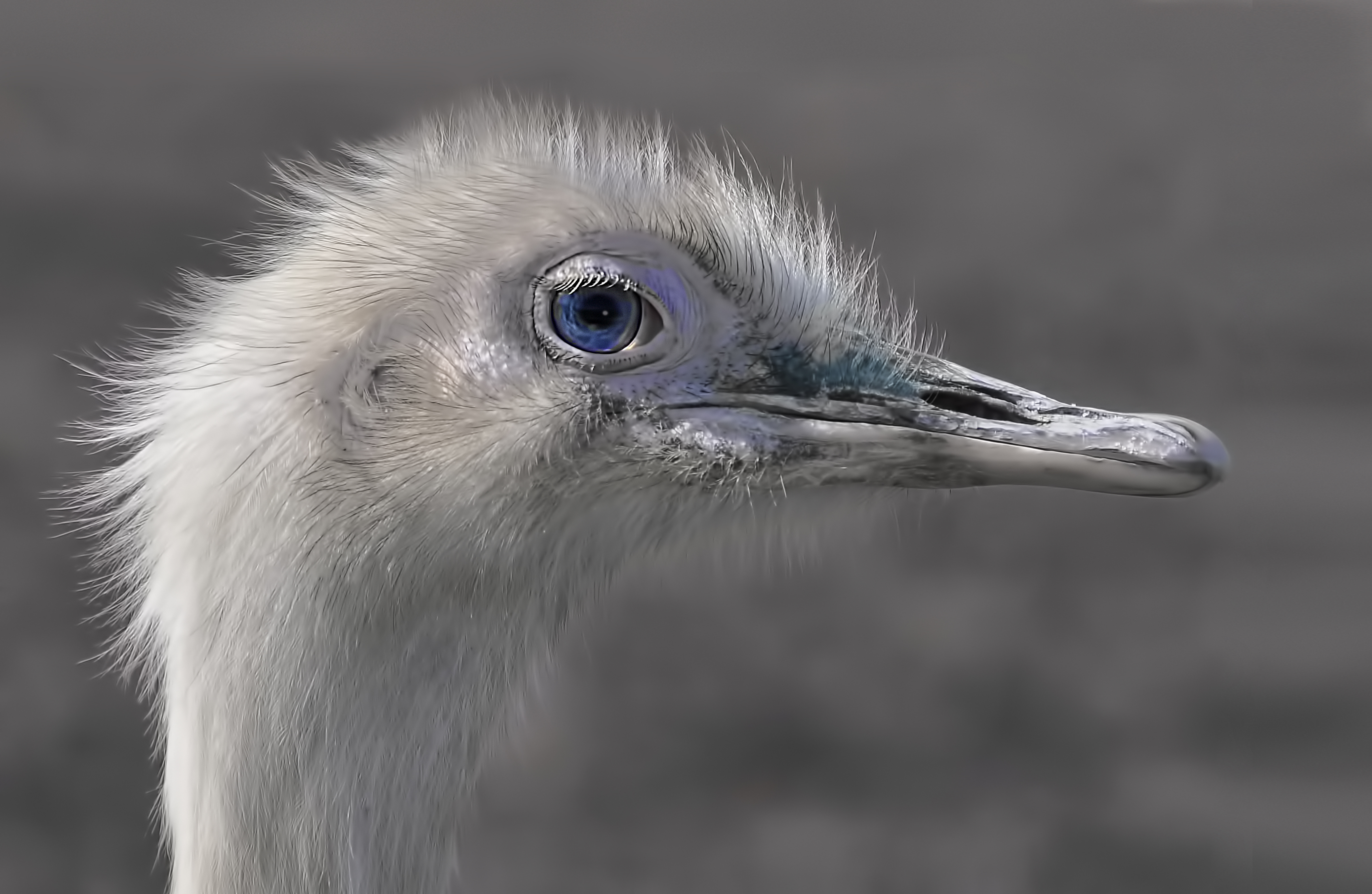 15 Points-One blue eye-Jenny Fryer LRPS