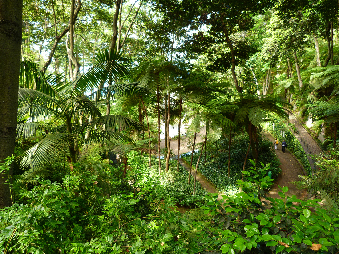 3rd – Tropical Trees in Madiera - Mike Pritchard