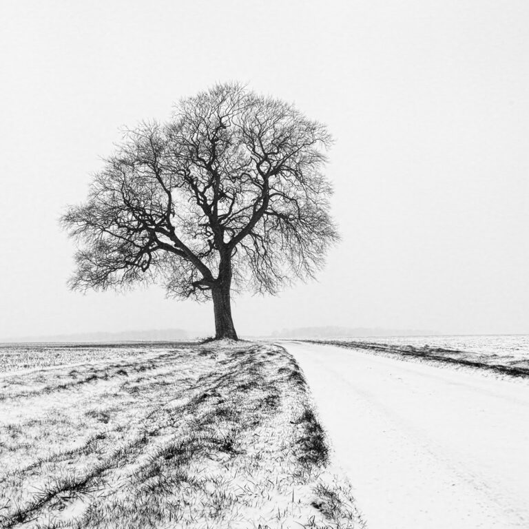 17 Points -Chavenage Tree -David Gamm